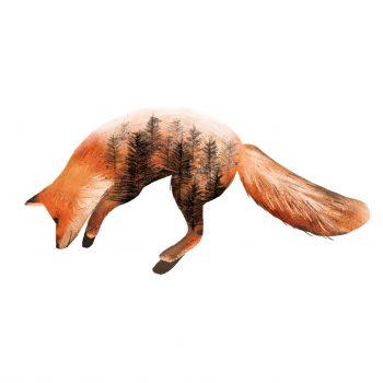 Illustration of a fox jumping.